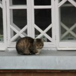 Кошка в Шамордино